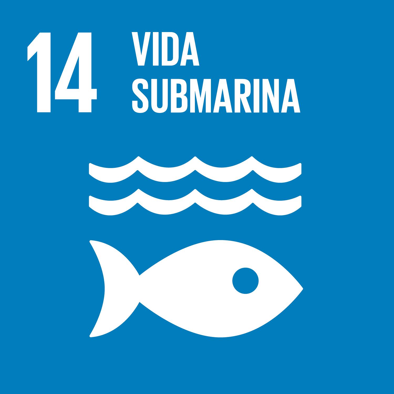 14 Vida submarina